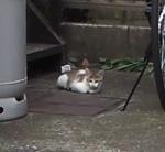 cat189.jpg