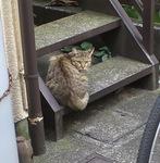 cat191-2.jpg