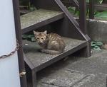 cat192.jpg