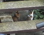 cat193-2.jpg