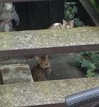 cat194-2.jpg