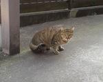 cat197-2.jpg