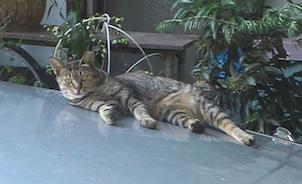cat900-2.png